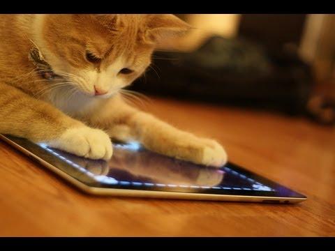 meo choi ipad - Khi loài vật sử dụng iPad