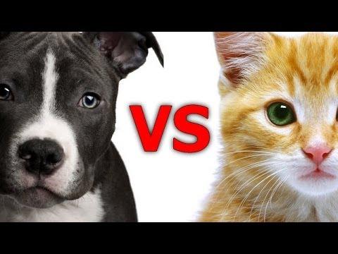 so sanh cho meo - Sự khác biệt giữa chó vs mèo