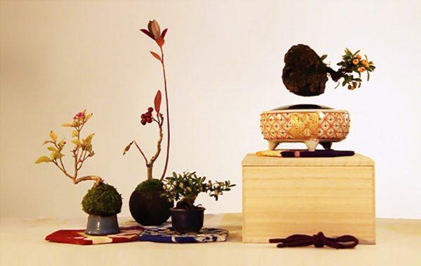 24_Air Bonsai