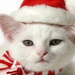 christmas 21 150x150 - 50 ảnh nền Giáng Sinh cực dễ thương cho điện thoại
