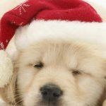 christmas 38 150x150 - 50 ảnh nền Giáng Sinh cực dễ thương cho điện thoại