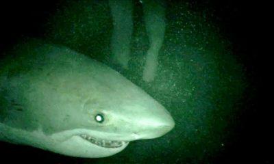 Mồi cá mập movie review