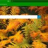 BlueSky Browser 100x100 - BlueSky Browser: Trình duyệt UWP hỗ trợ extension trên Windows 10
