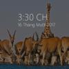 Modern Glance 100x100 - Cách làm màn hình chờ Win 10 dạng Glance trên Lumia