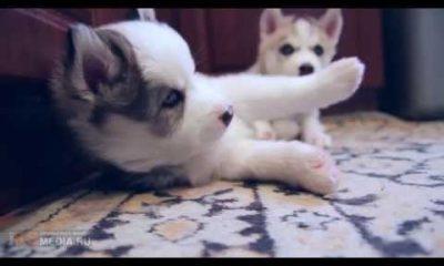 nhung chu cho de thuong 400x240 - Những chú chó dễ thương