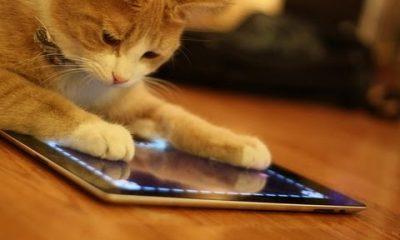 meo choi ipad 400x240 - Khi loài vật sử dụng iPad