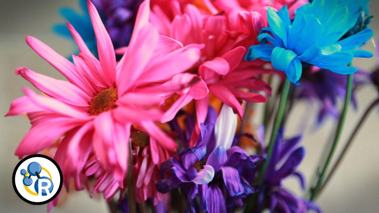 6 meo cham soc hoa - 6 mẹo chăm sóc hoa giúp hoa tươi lâu hơn