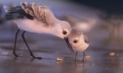 phim ngan piper pixar 400x240 - Piper: Phim ngắn tuyệt vời của Pixar