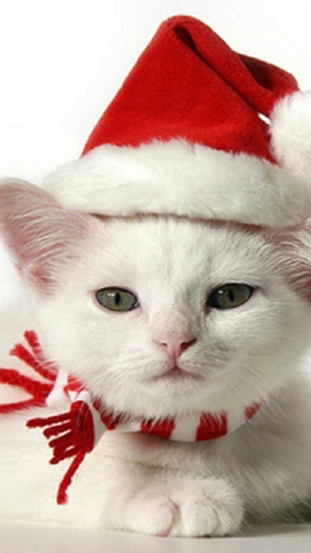 christmas 21 - 50 ảnh nền Giáng Sinh cực dễ thương cho điện thoại