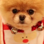 christmas 37 150x150 - 50 ảnh nền Giáng Sinh cực dễ thương cho điện thoại