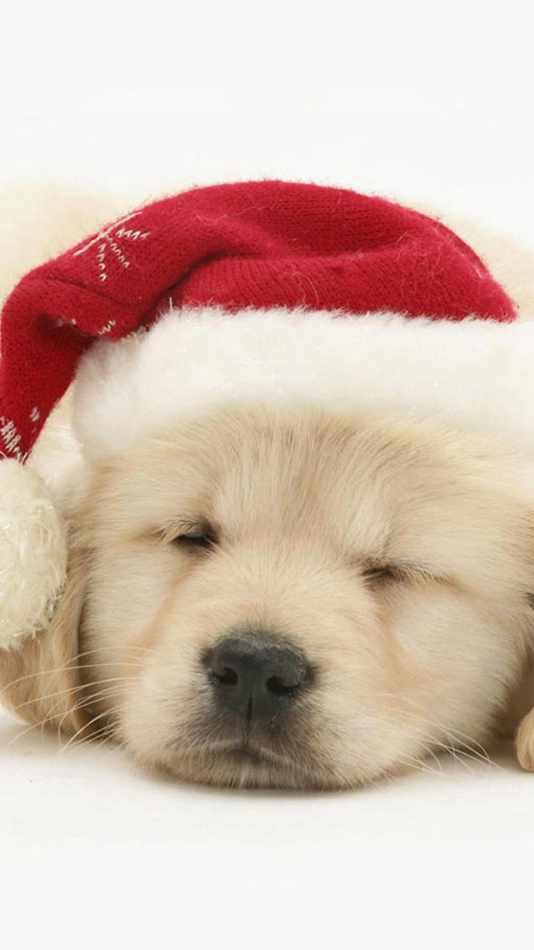 christmas 38 - 50 ảnh nền Giáng Sinh cực dễ thương cho điện thoại
