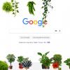 More Plants 100x100 - Ngắm cây xanh trên mọi trang web bạn truy cập