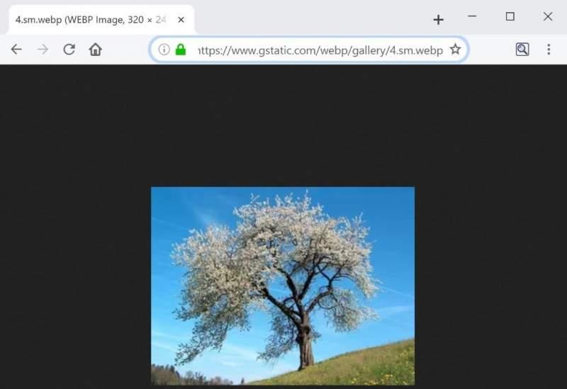 firefox webp 2 800x549 - Firefox 65 chính thức hỗ trợ chuẩn hình ảnh WebP